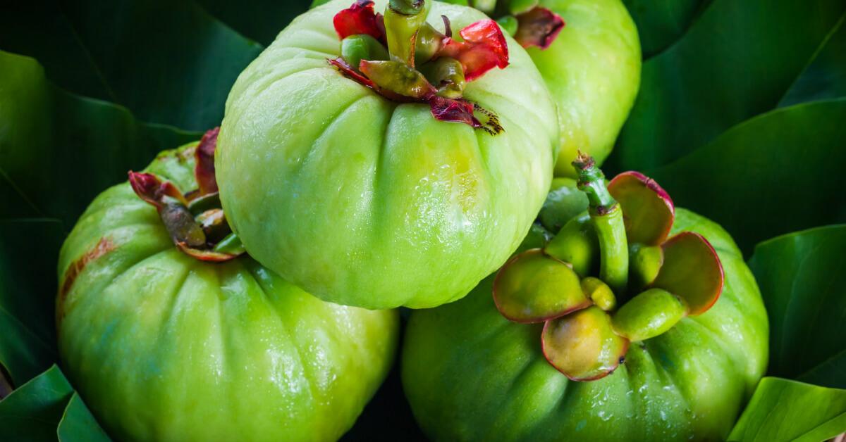 garcinia cambogia supplemento alimentare